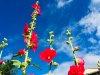 E27-1-Blumenpracht