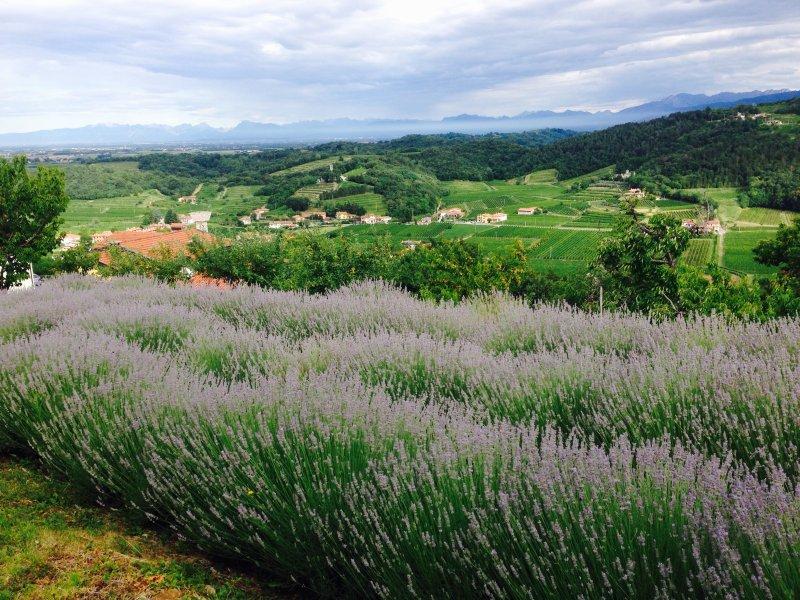 E30-2-Lavendelfeld-Breg
