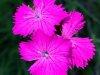 E10-2-Blumenpracht